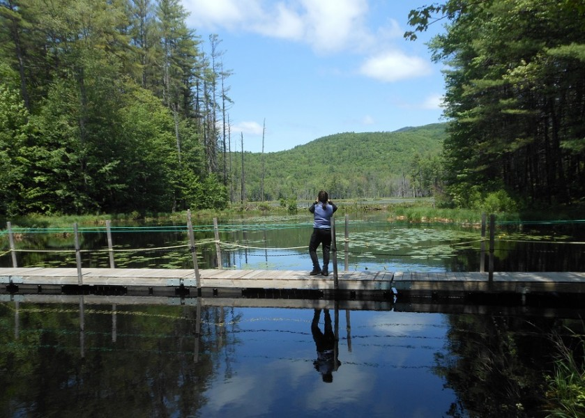 The mile-long trail around Quincy Bog in Rumney, New Hampshire includes wooden planks allowing visitors to walk over water. Photo by Marty Basch.