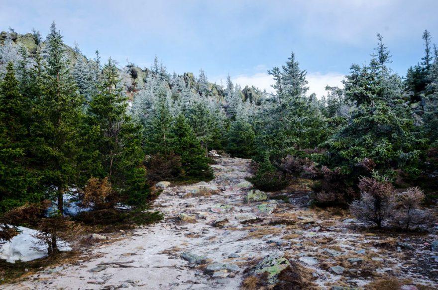 Eco-Friendly Christmas Tree | ActionHub