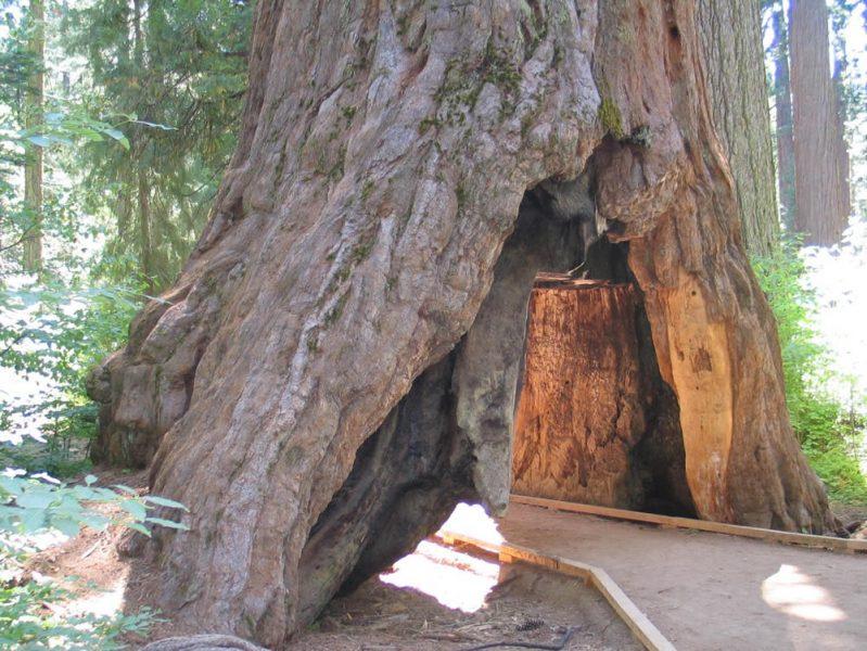 Tunnel Tree | ActionHub