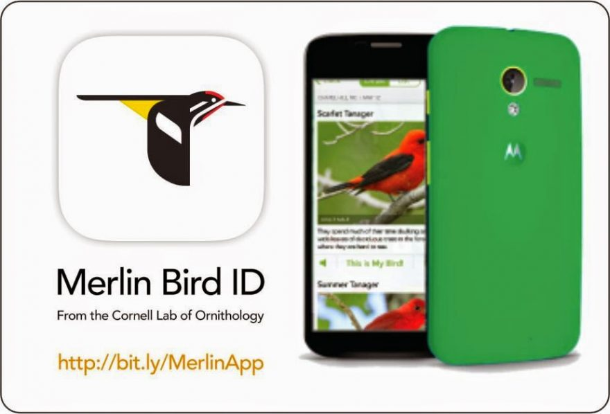 Merlin Bird ID app | ActionHub