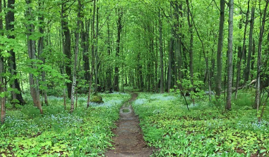 5 Michigan Trails with a Twist   ActionHub
