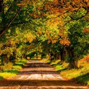 5 Michigan Trails that Lead to Autumn Gold | ActionHub