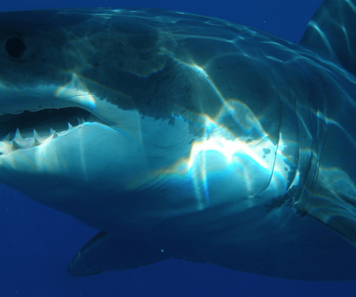 Australian Surfer Narrowly Escapes Great White Shark Attack | ActionHub