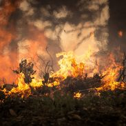 Wildfires Abound in U.S. National Parks | ActionHub