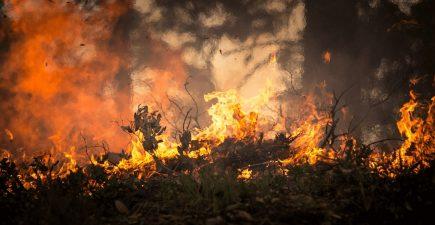 Wildfires Abound in U.S. National Parks | ActionHub