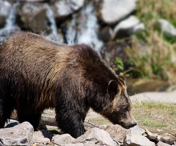 All you need to know about bear spray | ActionHub