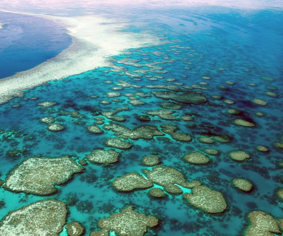 Explore the Great Barrier Reef without traveling to Australia | ActionHub