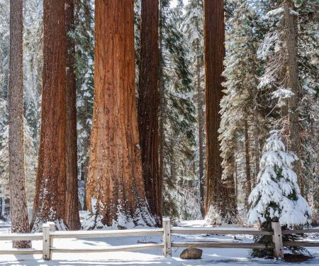 Tips for visiting Sequoia National Park this winter | ActionHub