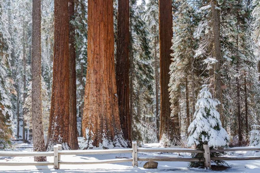 Tips for visiting Sequoia National Park this winter   ActionHub