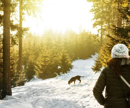 Top safety tips for winter hiking with your dog | ActionHub