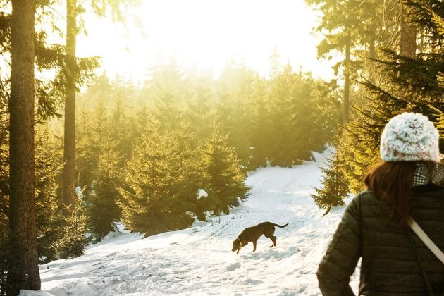 Top safety tips for winter hiking with your dog   ActionHub