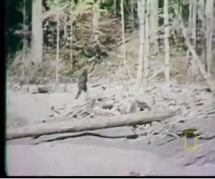 Bigfoot sightings: The most credible to date | ActionHub