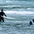 Surfers chased out by grumpy sea lions in New Zealand | ActionHub
