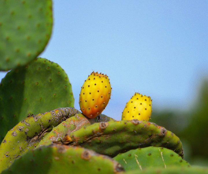 Medicinal plants found in the wilderness | ActionHub