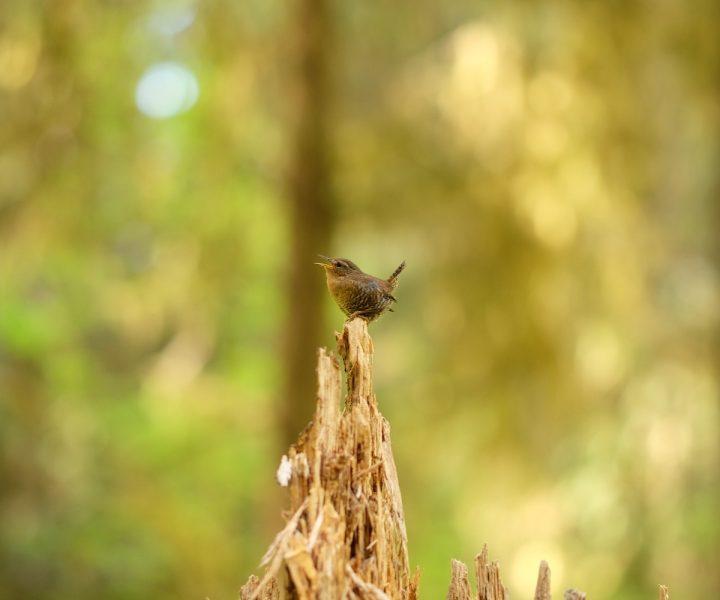 bird-watching-tips