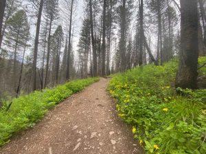 Morrell-Falls_Trail