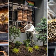 beyond_clothing_beehives