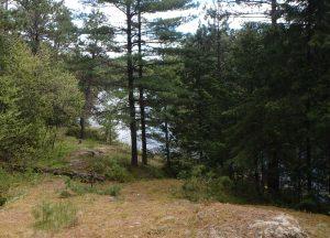 mead_wilderness_campsite