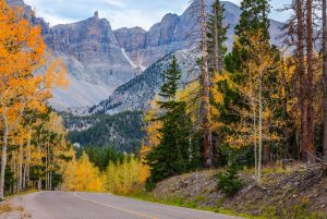 great-basin-park-fall-color