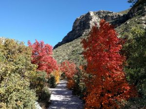 guadalupe-mountains-fall-color